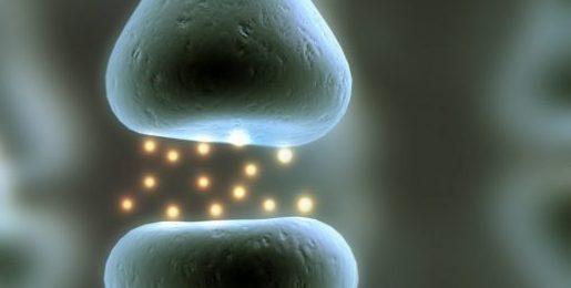 På bilden syns synaps, kommunikation mellan hjärnceller.